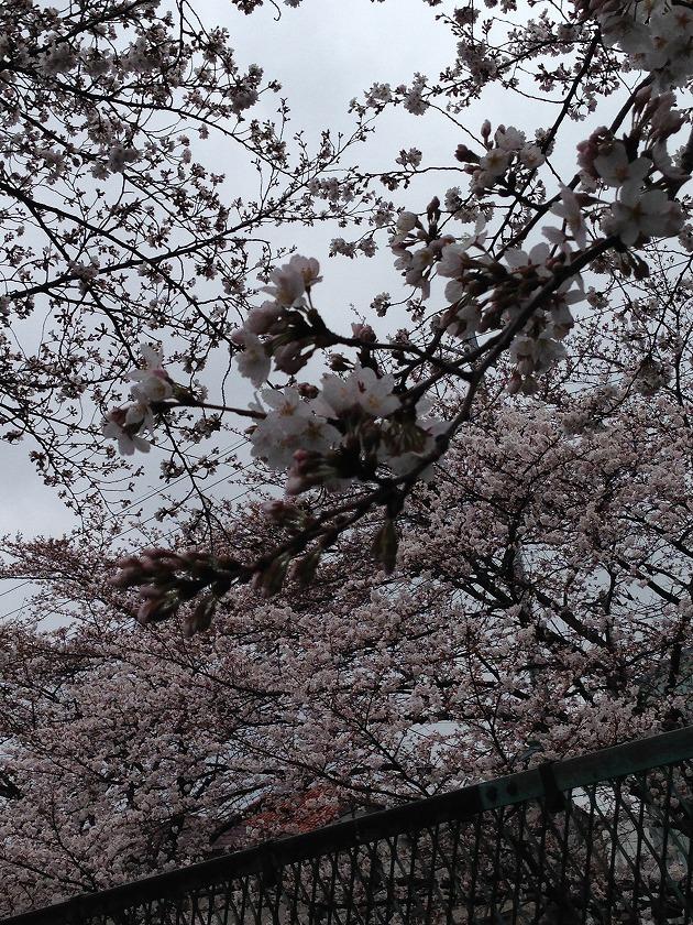 目黒川風2
